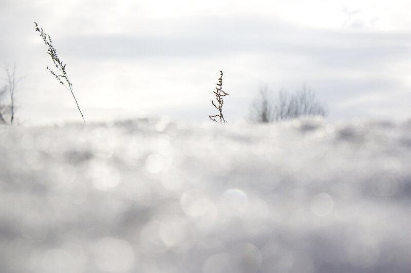 Снег, поле и травинки