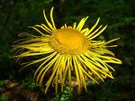 Цветок - солнце.