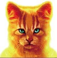 Коты-Воители из Китайских книг.