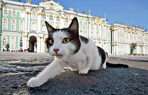 В Санкт-Петербурге раздают котиков из Эрмитажа