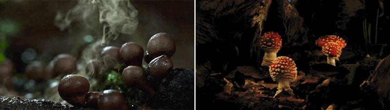 Вы видали как растут грибы?