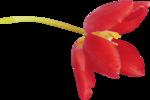 Spring_Florals_WendyP_el (26).png