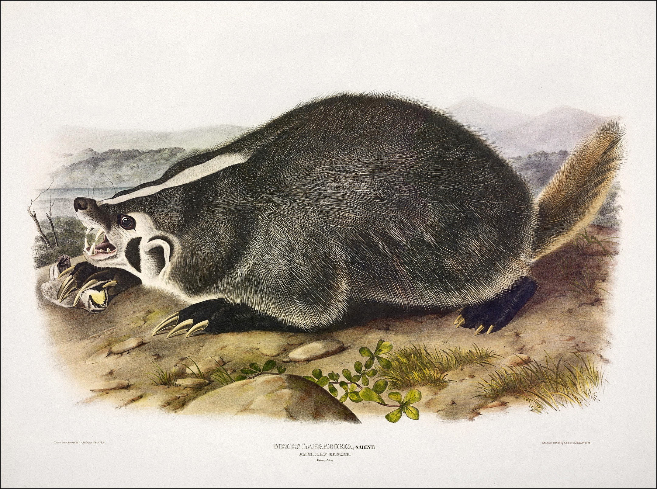 John James Audubon, The Viviparous Quadrupeds of North America