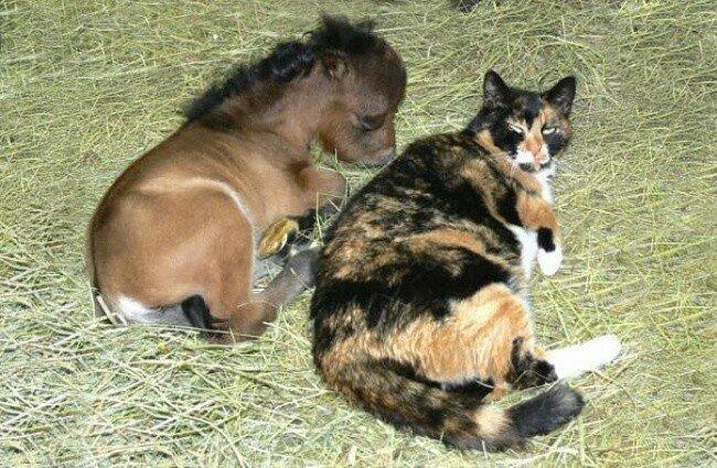 Почему мы любим и даже обожаем лошадей (красивые фотографии)