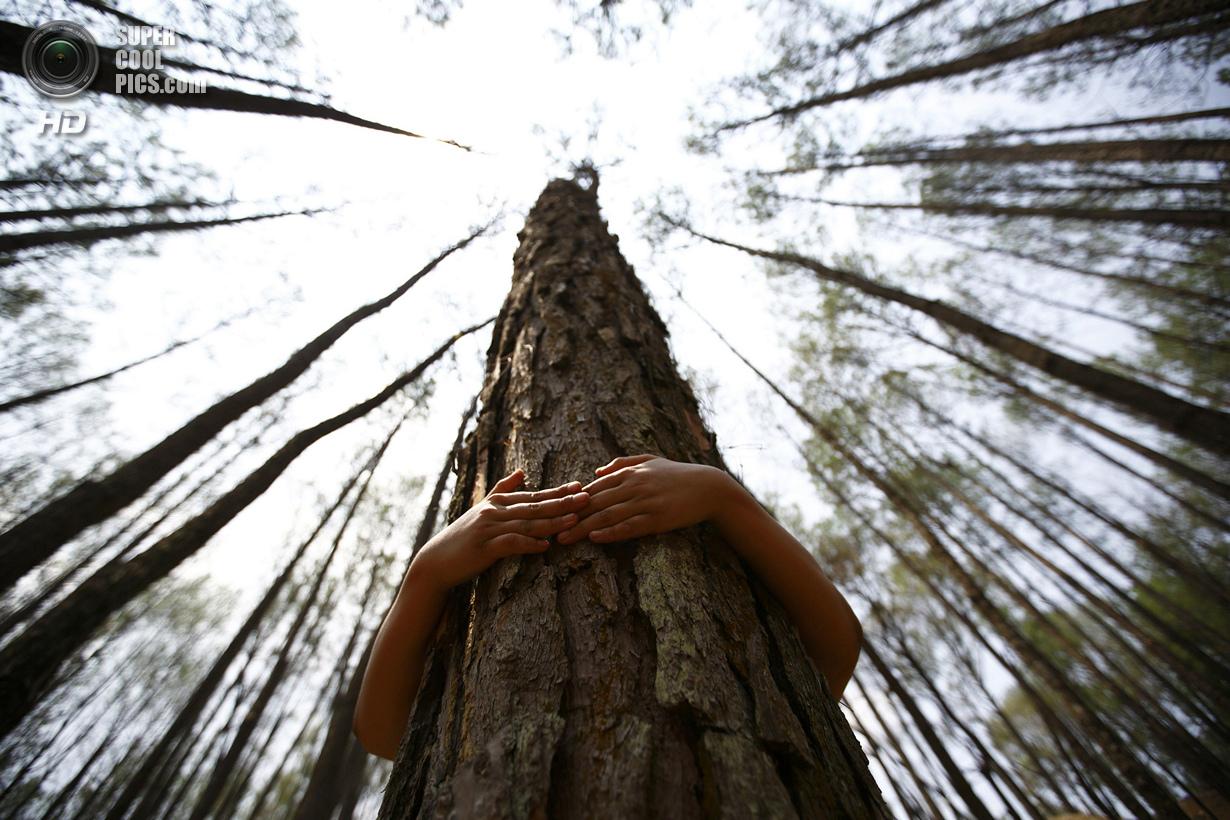Рекордные объятия с деревьями (6 фото)