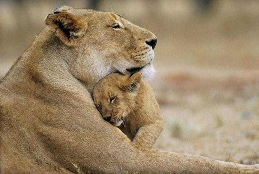 Любовь кдетям безгранична. Инетолько улюдей