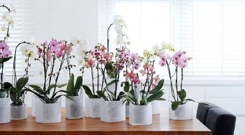 Как заставить орхидею цвести (3 фото)