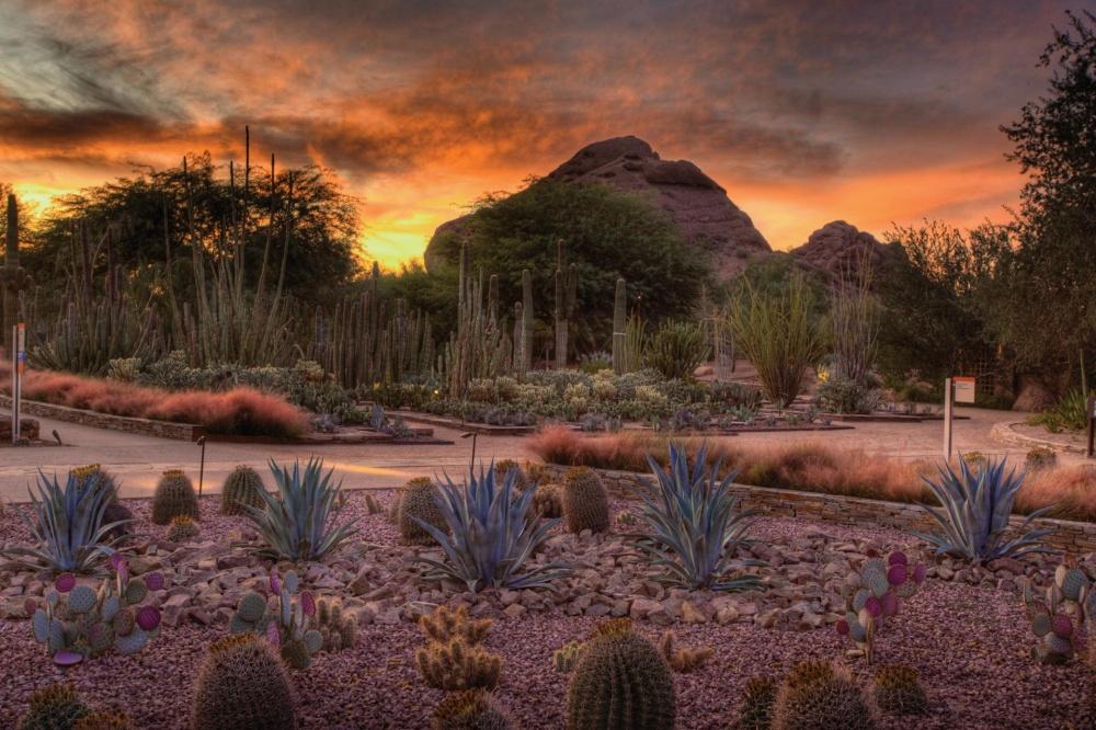 Вэтом саду собрана самая большая коллекция кактусов вмире. Здесь проводятся исследования пустынных