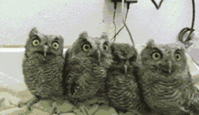 Superb Owl Sunday или как отрываются в интернете