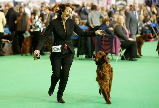Dee Milligan-Bott who claimed her dog was poisoned at Crufts 2015, shows an Irish Setter the second