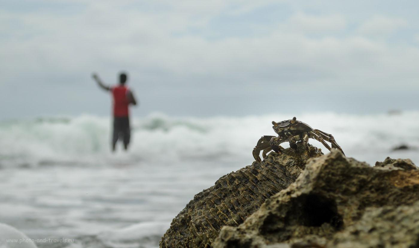 Фотография 14. Нас не догонишь! Нас не поймаешь! Отдых на Шри-Ланке дикарями в мае. Рыбак на пляже Хиккадува.