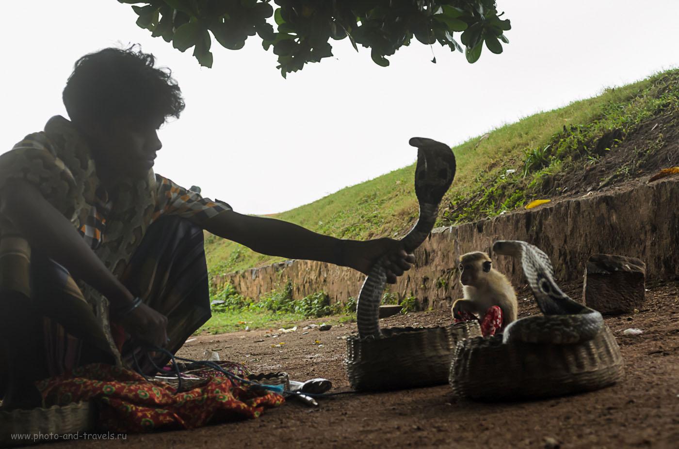 Фото 9. Заклинатель змей в форте Галле на Шри-Ланке. Отзывы туристов об отдыхе на острове самостоятельно. По дороге в Тиссамахараму.