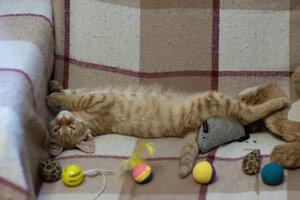 Спят усталые игрушки...