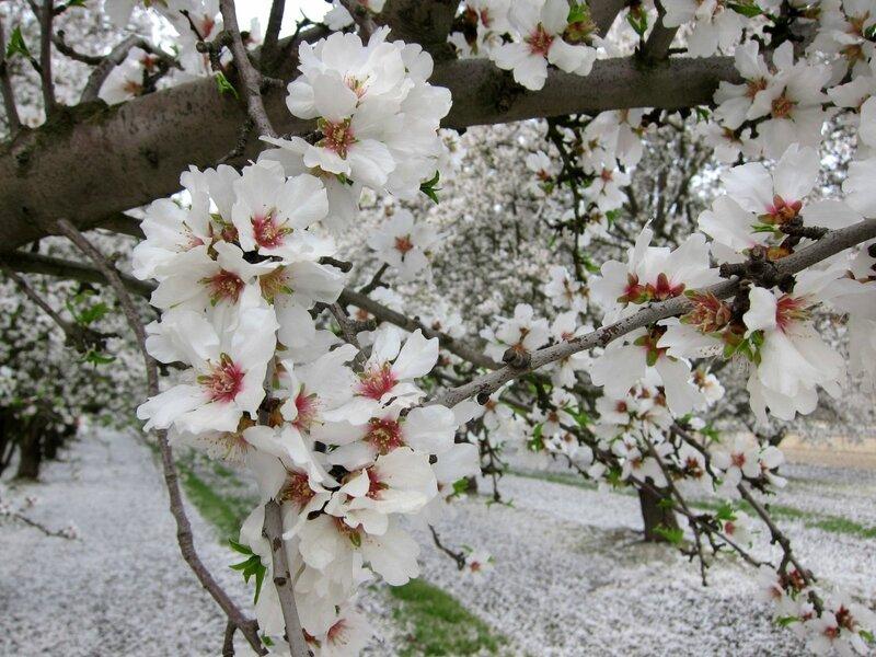 Весна в КАЛИФОРНИИ