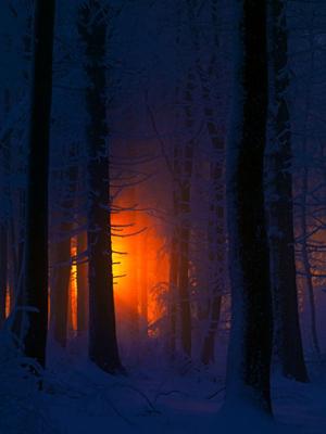 Отблеск костра в лесу