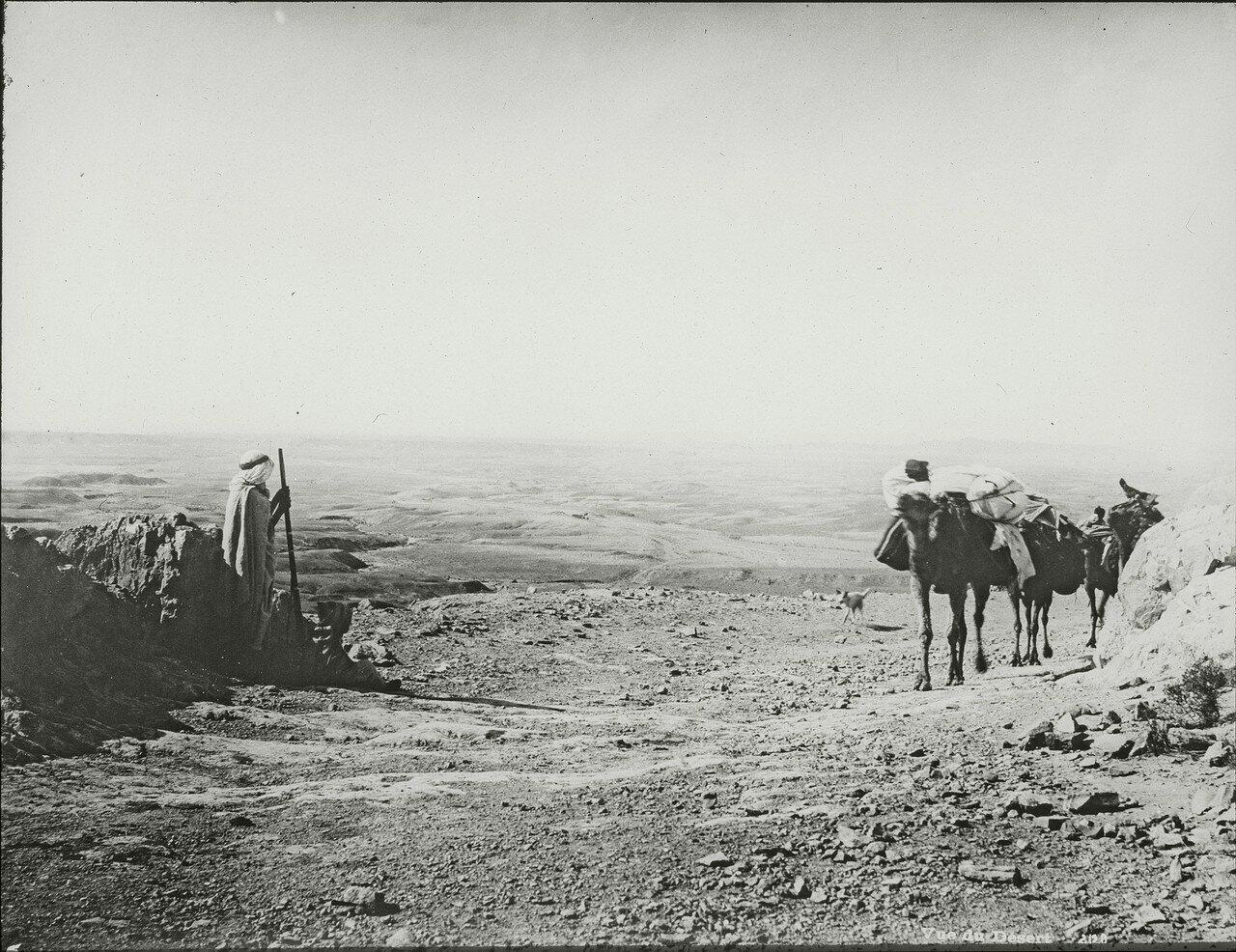 Вид пустыни в в окрестностях Бискры