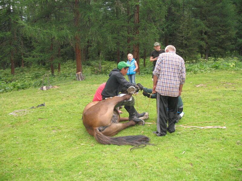 Буряты подковывают лошадь