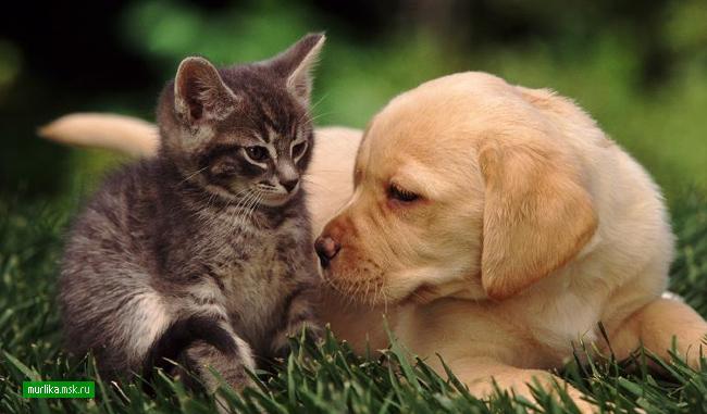Выбор кошки, выбираем кошку