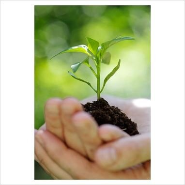 рассада как посадить вырастить уход