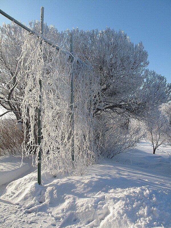 Зима,с.Остров,иней.