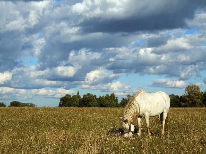 яндекс фото лошади 8