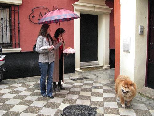 Севильские зонтики-3