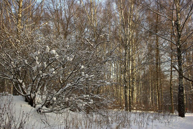 В солнечном заснеженном лесу