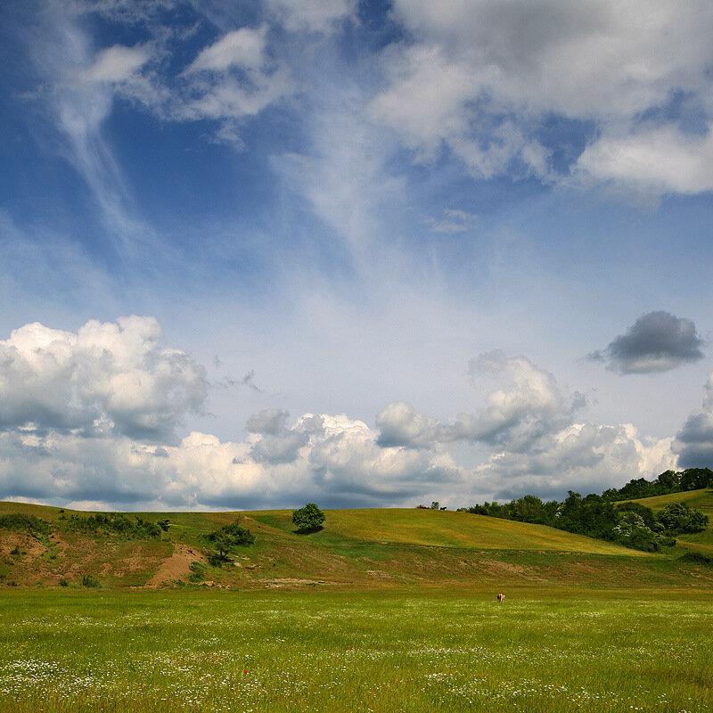 Пейзаж с одним-единственным маком и отвернувшимся осликом.