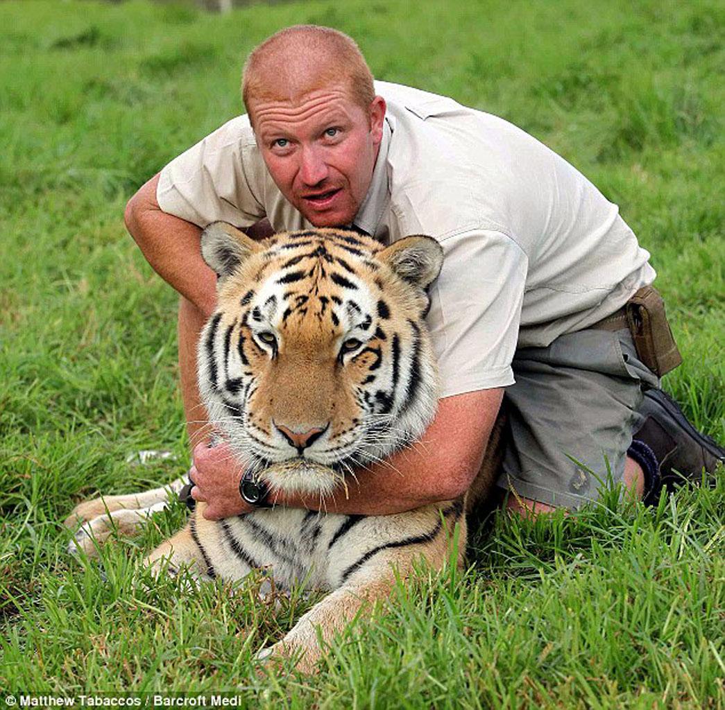 Амурский тигр Шошо и его друг, смотритель парка для тигров в Южной Африке возле города Порт-Элизабет, Эшли Гомберт(1280_c)