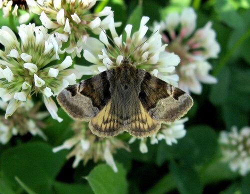 Альбом:  Бабочки Автор фото: Олег Селиверстов