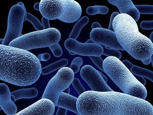 В домашней пыли находится около 9 тысяч микробов