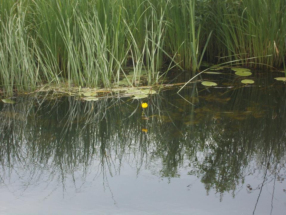 Река в селе Коелга (13.07.2015)