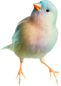 птички голубые