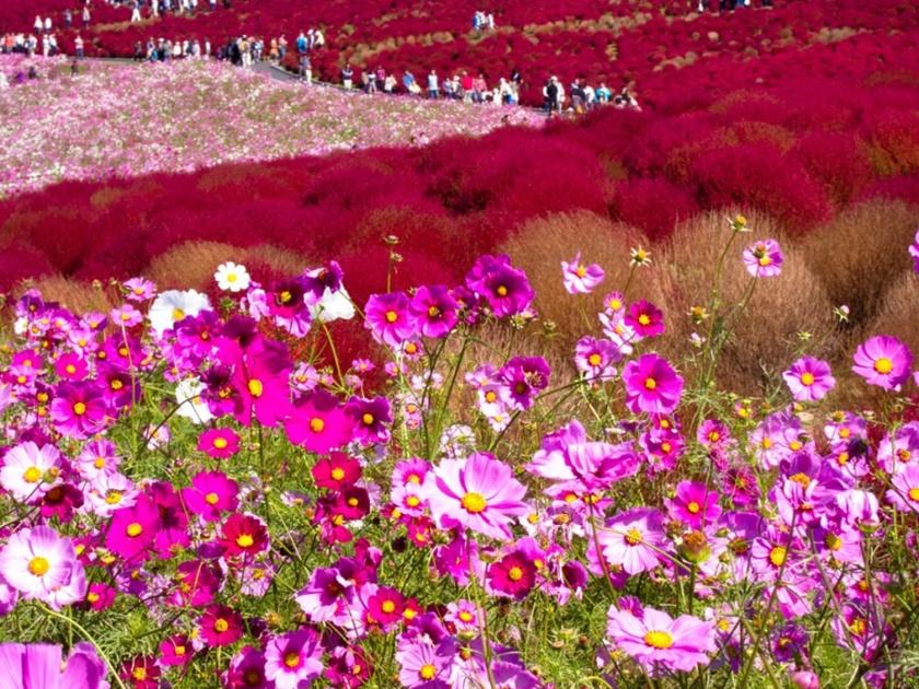 Живописный японский парк Хитати Кайхин 0 1422c1 6b8d2115 orig