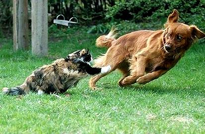 Кот с собакой.jpg