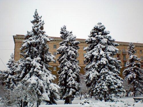 Укутал ели снег