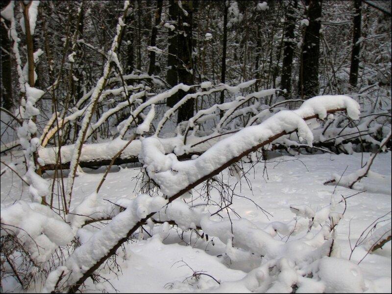 Стволы деревьев под снегом