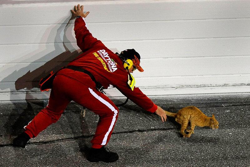 Работник Международной трассы «Daytona» гоняется за кошкой перед самым началом соревнований «Budweiser Shootout», Дэйтона Бич. (John Harrelson/Getty Images for NASCAR)