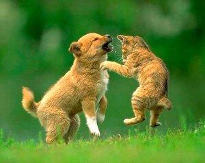 http://img-fotki.yandex.ru/get/3910/elite-animal.2/0_243c1_2f279b33_M.jpg