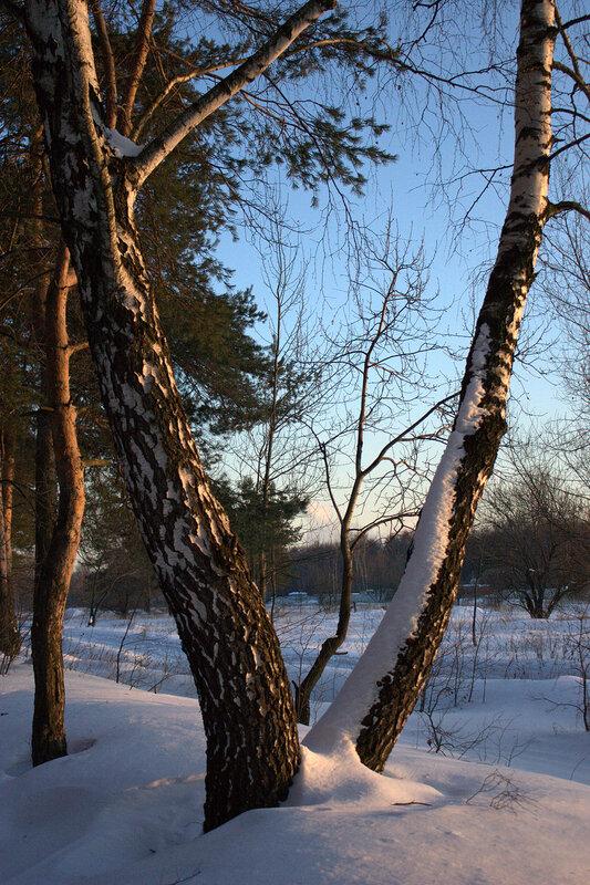 Прекрасный зимний день