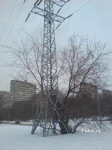 Электромачта и дерево 1