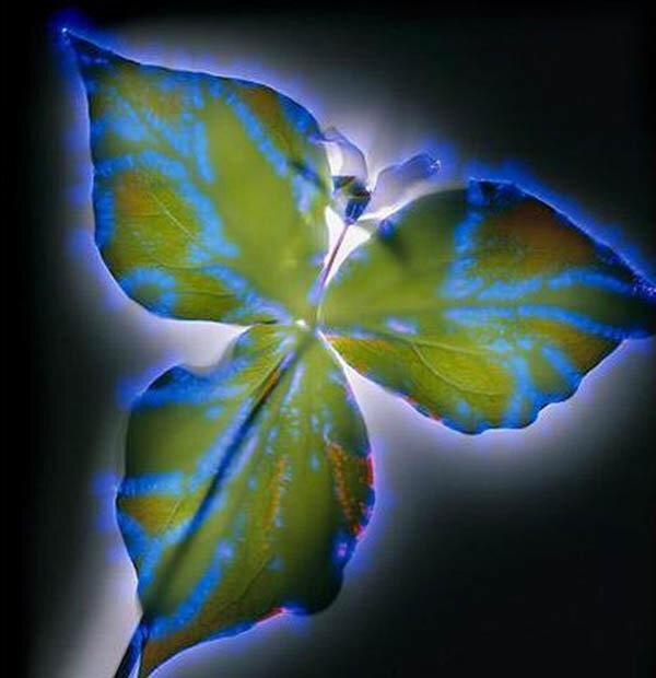 электричество и растения