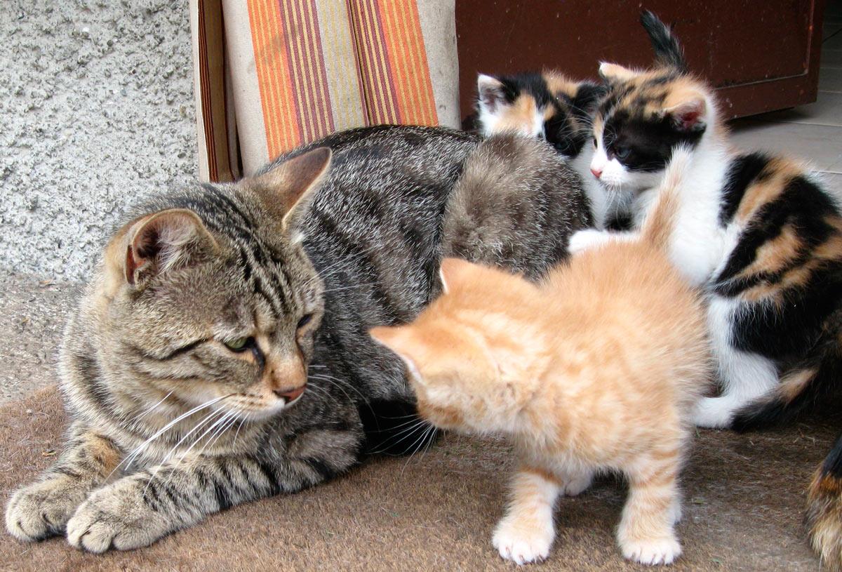 Все за и против кастрации котов