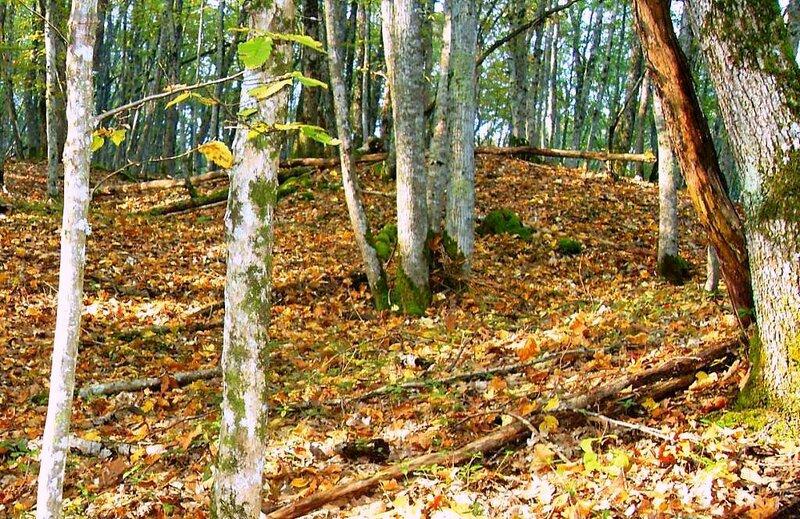На склонах лесных, под Горячим Ключом, на слёте (191).JPG
