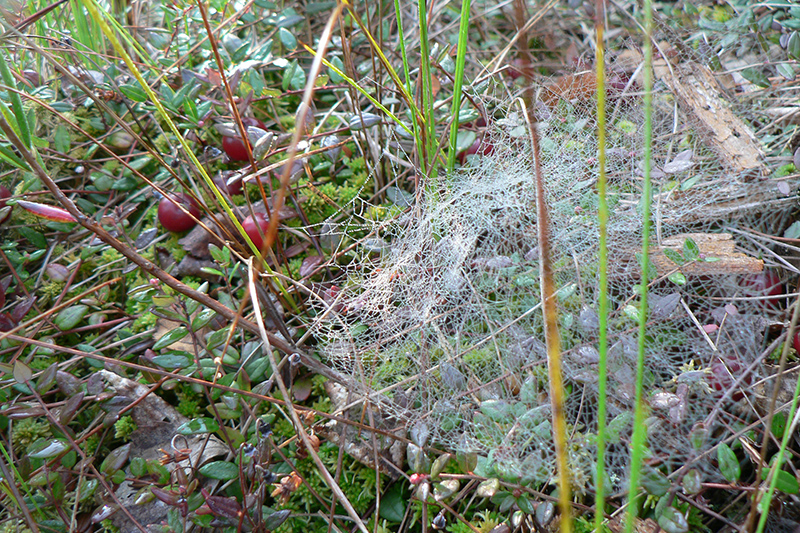 прохладное болото паутина