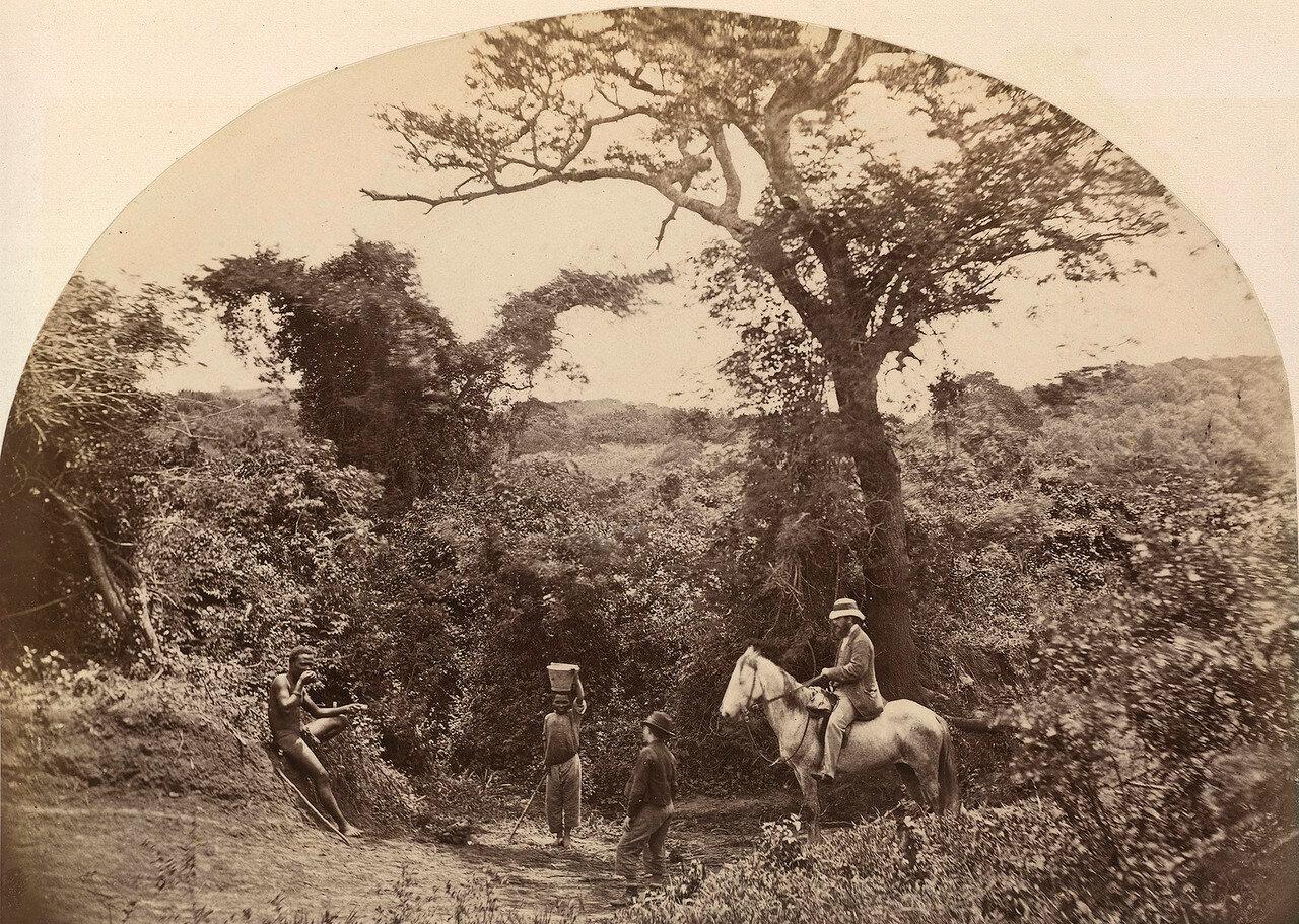 Лес в колонии Наталь