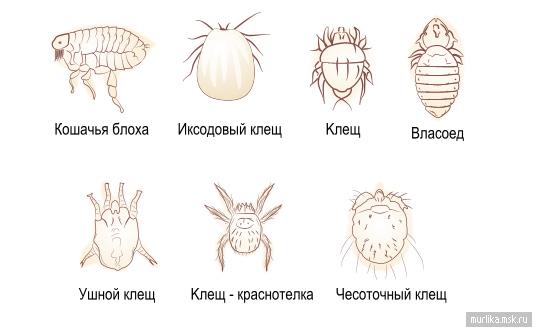 паразиты поражающие мозг человека