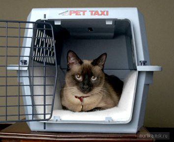 Кошка путешествует
