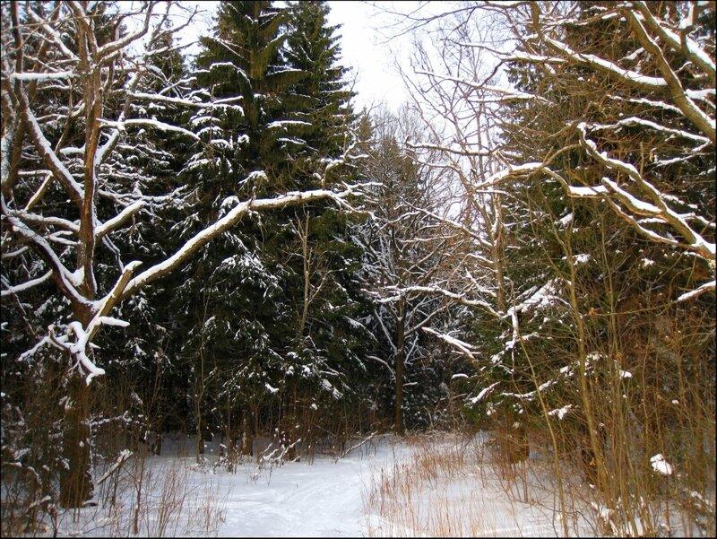 Врата в лес