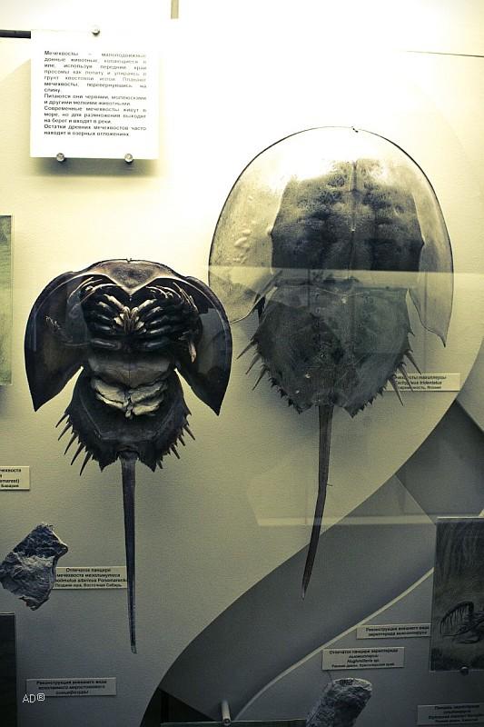 Палеонтологический музей